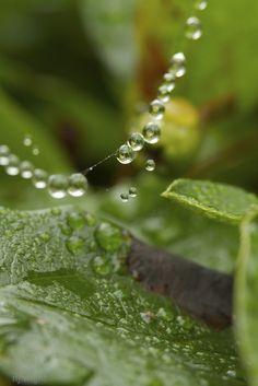 Cobwebs and rain… #DLLetItRain