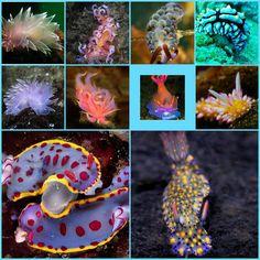 Sea slugs collage 5