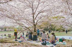 Fukuoka: Ohori-koen - Tricia Will Go Places Cherry Blossom Japan, Cherry Blossom Season, Japan Spring Fashion, Tricia Gosingtian, Filipino Fashion, Jogging Track, Sense Of Place, Travel Outfits, Old Soul