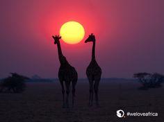 Safarieksperten er eksperter i Afrika safari. Old Trees, Water Sources, Inspirational Wallpapers, Environmental Design, Travel Images, Walking In Nature, Stargazing, Tanzania, Beautiful Landscapes