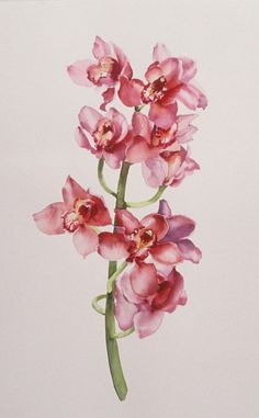Stephanie Anderson.  Orchid. Watercolour.
