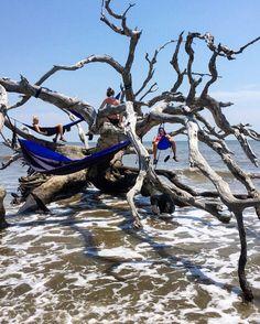 Best way to hammock. Best way to beach. - - -  #jekyllisland #driftwoodbeach #camping #campingcollective #getoutside #optoutside #hammocklife #eno #chaco #gabeach #hightide #relaxation #sisters #sistertrip by @theadventuresofryn