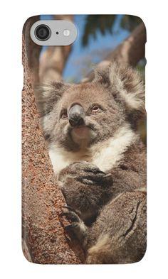 Koala by Elaine Teague