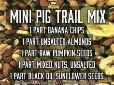 Potbelly Pig Care, Mini Potbelly Pigs, Mini Piglets, Pot Belly Pig Food, Pot Belly Pigs, Pet Pigs, Baby Pigs, Mini Pig Food, Pig Diet
