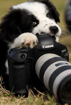 Life is like a camera; Focus on what's important, capture the good times, develop from the negatives and if it goes wrong...take another shot.  #dogs