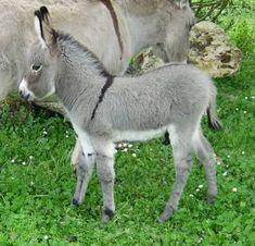Baby donkey...so cute!