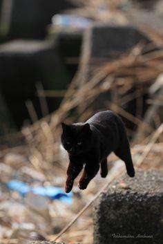 #cat #jump