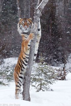 Wildlife Photography Workshops Winter Wildlife Photography Workshop - Jeff Wendorff