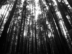 This picture was taken whilst walking through the Armstrong Redwoods park located near Sonoma, California. Want this picture printed on canvas or cards etc? Click on the image :) Sonoma California, San Francisco City, Framed Prints, Canvas Prints, Tree Line, White Art, Print Pictures, Taking Pictures, Black And White Photography