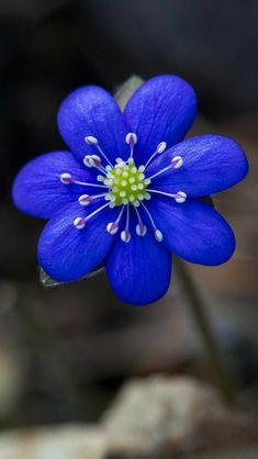 Wonderful Flowers, Rare Flowers, Exotic Flowers, Purple Flowers, Beautiful Flowers, Flower Aesthetic, Flower Pictures, Image Hd, Flower Wallpaper