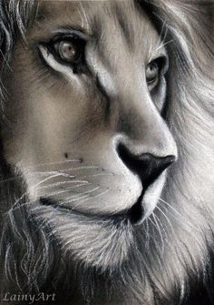 chalk and charcoal drawing of a lion - Day 326 of my 366 Drawing Project by secrets-of-the-pe. Lion Drawing, Painting & Drawing, Drawing Animals, Sketches Of Animals, Daily Drawing, Beautiful Drawings, Cool Drawings, Realistic Drawings, Beautiful Lion