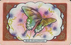 1 SINGLE COLES SWAP CARD - NAMED - ' BLUE SWALLOWTAIL ' in Collectables, Paper, Postcards, Playing Cards | eBay