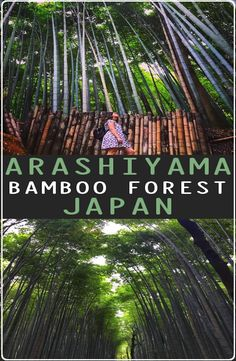 Kyoto's Arashiyama Bamboo Forest is located in western part of Kyoto near the base of the Arashiyama Mountains. How to get to Arashiyama Bamboo Forest Travel And Tourism, Travel Destinations, Bamboo Forest Japan, Country Maps, Go Outdoors, Kyoto Japan, Travel Memories, Outdoor Camping, Japan Travel