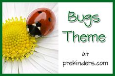 Bugs Theme at PreKinders!  Love the great ideas for centers, activities and printables!