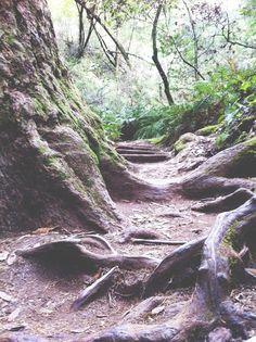 muir woods //allisonwyn