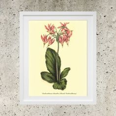 SALE Digital Poster Download   Botanic Garden by DigitalBanana