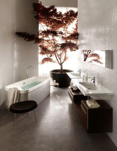 HUGE Japanese Maple in bathroom or anywhere. LAUFEN CONTEMPORARY BATHROOM DESIGN.