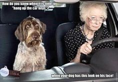 Funny Image Gallery: Funny Dog Pictures with Captions Wallpaper