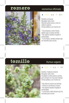 Planta tus propias especias III: romero y tomillo