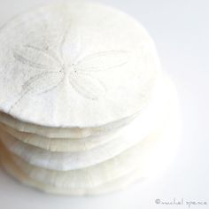 for my next tattoo, a Sand Dollar