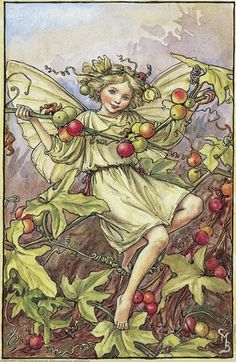 Illustration for the White Bryony Fairy from Flower Fairies of the Autumn. A girl fairy sits entwined amongst fronds of white bryony.  										   																										Author / Illustrator  								Cicely Mary Barker