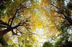 Lay on your back and gaze up into the leaves.