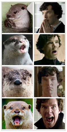 For Sherlock fans: Otters that look like Benedict Cumberbatch. A silly bit of business.