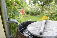 Aprenda como captar e usar a água da chuva. Acesse o Pensamento Verde e fique…