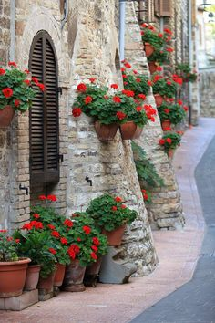 Geraniums in the streets of Assisi, Umbria, Italy. Potted Geraniums, Red Geraniums, Wonderful Places, Beautiful Places, Geranium Flower, Places Around The World, Beautiful World, Container Gardening, Beautiful Flowers