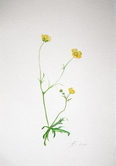 Meadow Buttercup, field flower, Fine Art print from original watercolor, boterbloem, spring flower. $14.00, via Etsy.