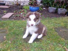 Stella unser Puppie