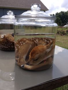 fetal deer - Google Search