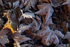 "#38 IFC Forum Contest 2014 24-12-14 ""Winter 3"" (Ph. Mariano Bortolin) https://www.flickr.com/photos/mariano-san/ Sigma Dp2 Quattro http://forum.foveon.it"