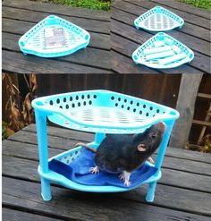 Use a corner shelf as a bunk bed for your rats! Get a corner shelf that has a rim or wall along each side. If needed, provide a ramp up to the top bed for your rats. Hamsters, Pet Rodents, Chinchillas, Rat Cage Diy, Pet Rat Cages, Ferret Cage, Diy Rat Toys, Pet Toys, Rata Dumbo