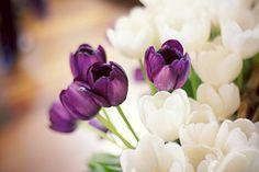 Purple and White Tulips <3