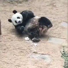 Cute Animal Memes, Animal Jokes, Cute Animal Pictures, Funny Animal Videos, Cute Funny Animals, Cool Pets, Cute Dogs, Cute Babies, Tier Fotos