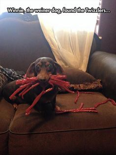 The Twizzler Thief :)