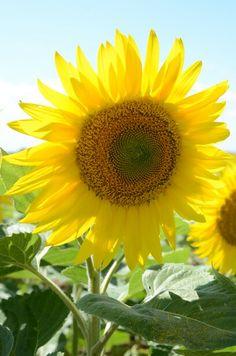 Il sole della natura