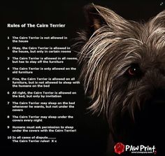 Rules of the Cairn Terrier