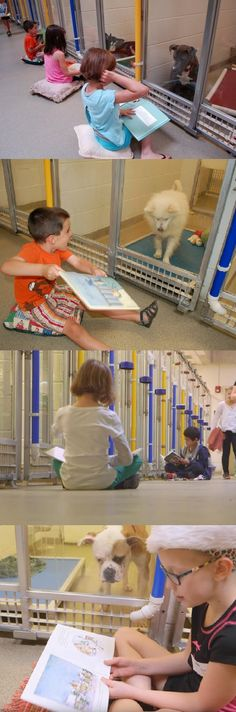 To help shy shelter dogs get ready to be adopted, kids at this Humane Society in Missouri read them books. Cool.