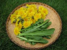dandelion recipes and tips