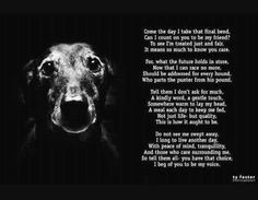 Adopt a retired greyhound. I promise you won't regret. Ever.