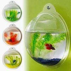 Simply Creative Products: Wall Mounted Fish Bowl