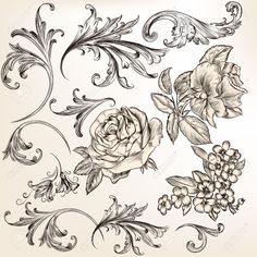 25204543-Vector-set-of-swirl-and-floral-elements-for-design-Calligraphic-vector-Stock-Vector.jpg (1300×1300)