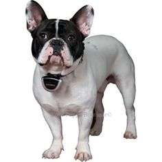 Eyenimal Pet Video Camera - Training Posh Puppy Boutique