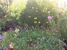 Garden 2013
