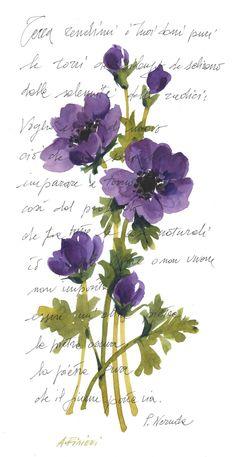 anemoni viola