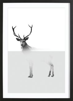 Deer - The Wall Shop - Gerahmtes Poster