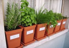 backyard designs – Gardening Ideas, Tips & Techniques Herb Garden, Vegetable Garden, Pot Pourri, Herb Pots, Growing Herbs, Green Life, Garden Planning, Interior Design Living Room, Container Gardening