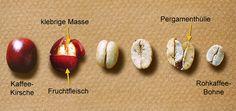 Infos rund um den Kaffeeanbau im Hensler Kaffee Onlineshop